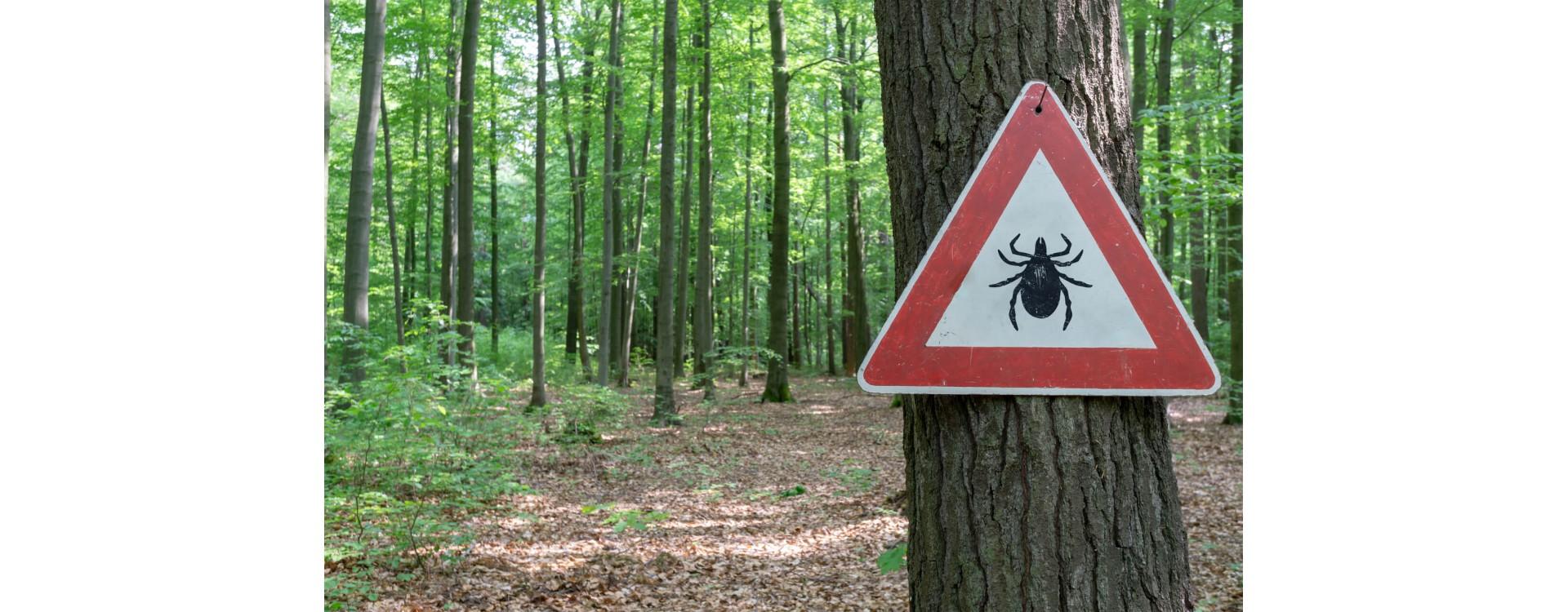Malattie del legno: come eliminare i tarli del legno, gli insetti e i funghi
